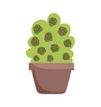 potted plant flowers decoration isolated icon vector image vector image