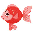 red isolated gold fish vector image vector image