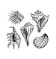 seashells hand drawn ink pen sketch set vector image