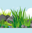 garden scene with rocks and grass vector image