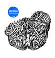 hand drawn mushroom anemone vector image vector image