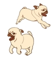Set of two pug puppies vector image vector image