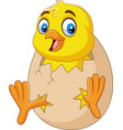 cartoon little chick hatching out egg vector image vector image