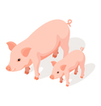 Isometric 3d of small and large pig vector image vector image