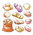 potatoes hand drawn set uncooked farm food vector image vector image
