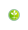 seed plant round logo vector image vector image