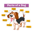 Diagram showing parts of dog vector image