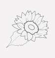 sunflower icon line element vector image