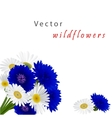 white background with flowers camomile vector image