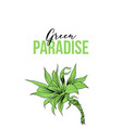 agave attenuata hand drawn color vector image