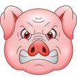 angry pig head cartoon mascot vector image