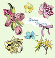 colored set spring flowers tulips and narciss vector image