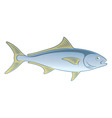 fish amberjack vector image vector image