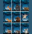 set of exotic animal in wild forest vector image vector image