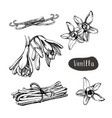 vanilla flower isolated on the white background vector image