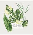 watercolor tropical green leaves monstera vector image