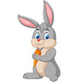 cartoon rabbit holding a carrot vector image vector image