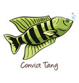 convict tang color vector image