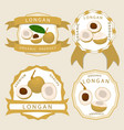 for fruit yellow longan vector image vector image