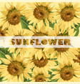 sunflowers pattern summer background vector image vector image