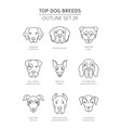 top dog breeds pet outline collection vector image