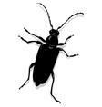Cerambyx scopolii vector image