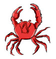 crab animal from ocean vector image vector image