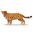 flat polygonal jaguar vector image vector image