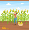girl farmer collecting corn agricultural worker vector image
