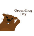 groundhog on a white background vector image