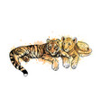lion cub and tiger cub from a splash watercolor vector image