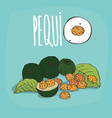 set of isolated plant pequi fruits herb vector image vector image