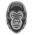 gorilla head mascot logo vector image