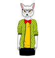 pretty cat girl in clothes vector image
