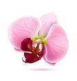 vector orchid flower vector image vector image