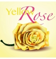 Card with Yellow Rose on Background vector image