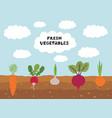 fresh organic vegetable garden on blue sky vector image vector image
