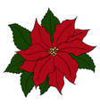 hand drawn poinsettia flowers full color vector image vector image