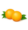 ripe juicy orange with green vector image vector image