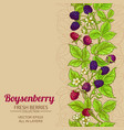 boysenberry branches pattern on color vector image vector image