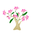Desert Rose or Bignonia on White Background vector image