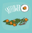 set of isolated plant safflower flowers herb vector image vector image