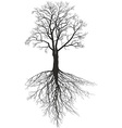 Walnut tree with roots vector image vector image