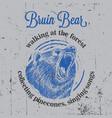 bruin bear vintage poster vector image