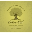 olive tree and olive oil vector image vector image