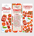red tomatoes and sauce vector image vector image