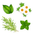 Aroma Herbs vector image vector image