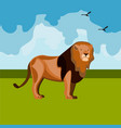 beautiful african big leo vector image