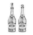 hand drawing two champagne bottles vector image