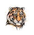 portrait a tiger head from a splash of vector image vector image
